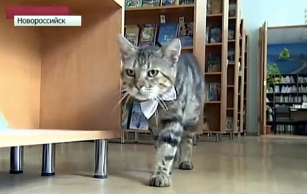 Former Stray Cat Becomes Assistant Librarian At Children's Library In Russia