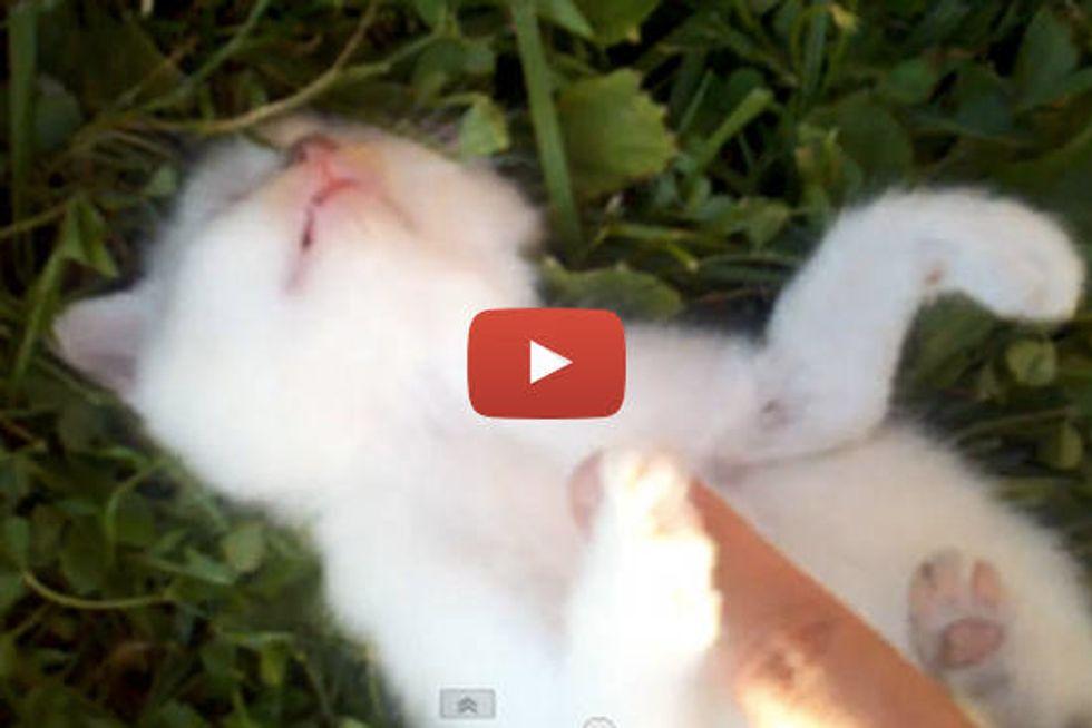 Happy Soft Kitty