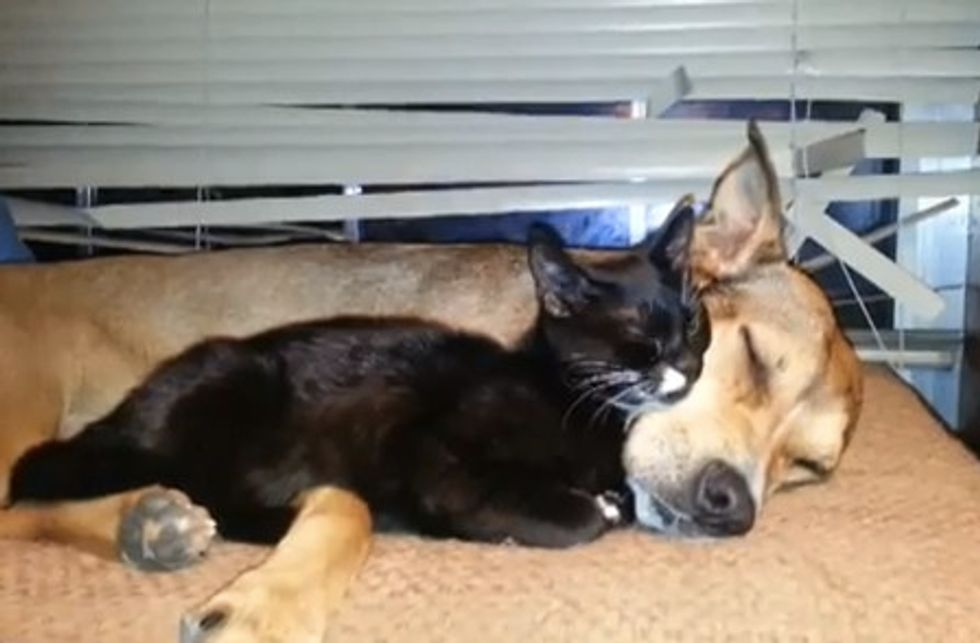 Rescue Kitten Thinks Dog Is Mama