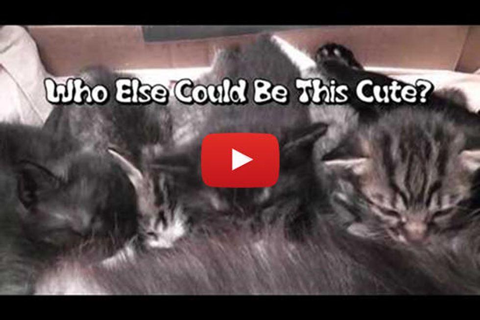 Cute Kitten Synchronized Ear Wiggles
