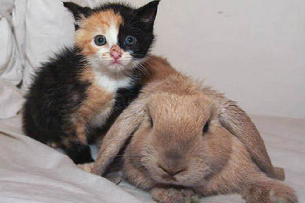 Orphan Kitten Adopted By Rabbit And Rescue Cat