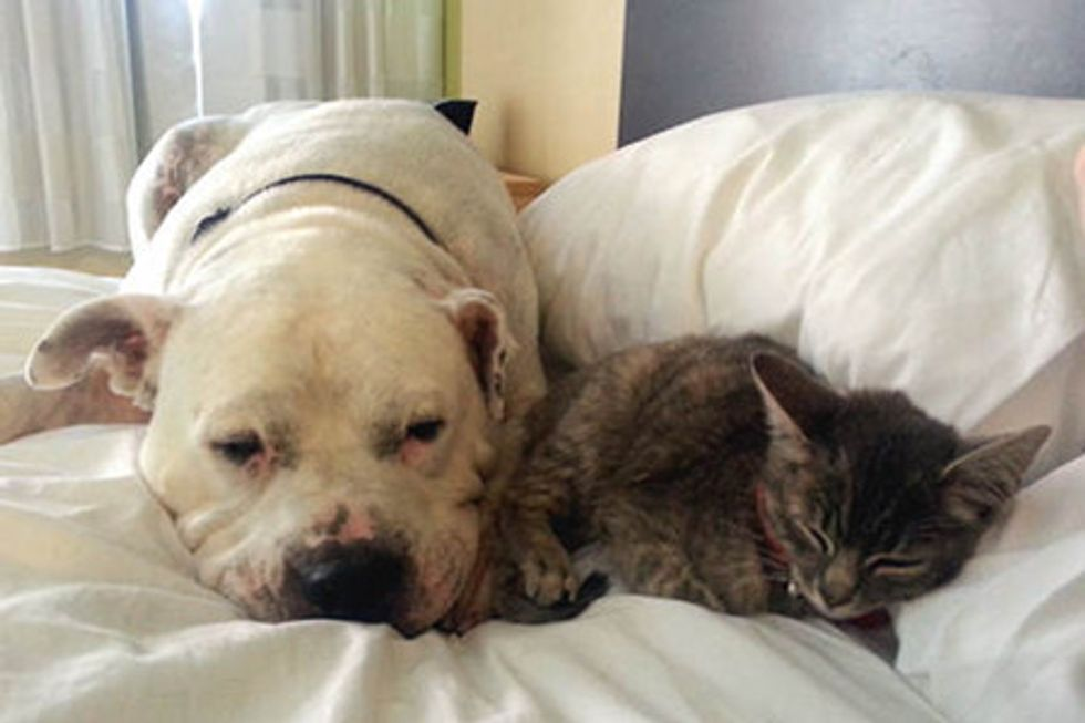 Rescue Kitten And Her Protective Dog Buddy