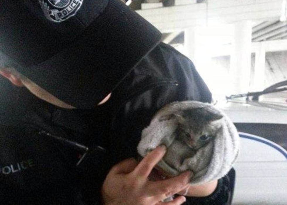 Kitten Saved By Kind Person, Adopted By Police Officer
