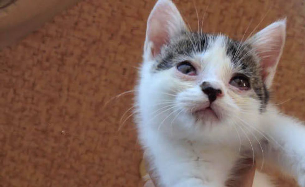 A Second Chance Helps Kitten See Again