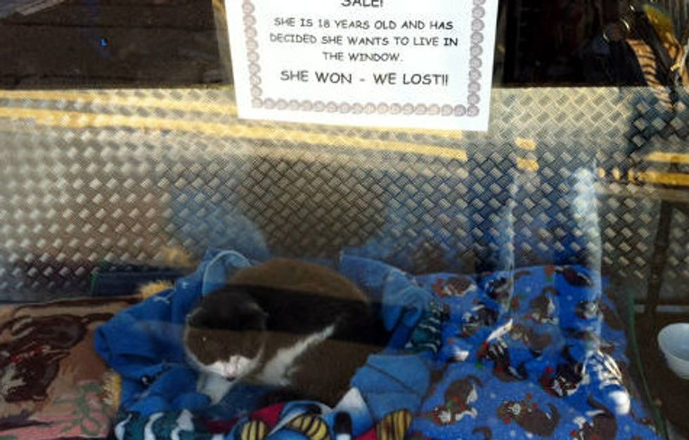 18 Year Old Cat Decides To Live In Store Window