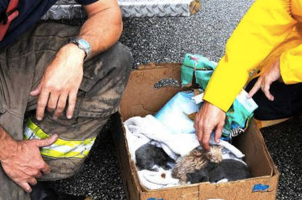 Firefighters Save New Born Kittens From Fire Debris