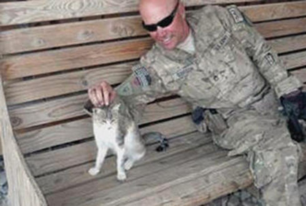Stray Cat Wants To Go Home To Her Soldier