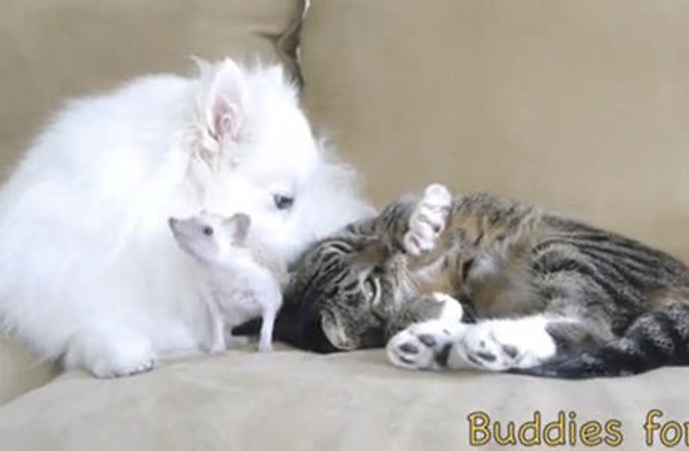 Beautiful Friendship: Cat, Hedgehog & Dog