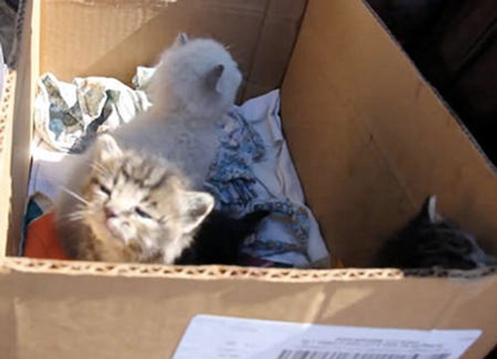 Kittens Trapped Behind a Wall Are Saved & Reunited With Mother Cat