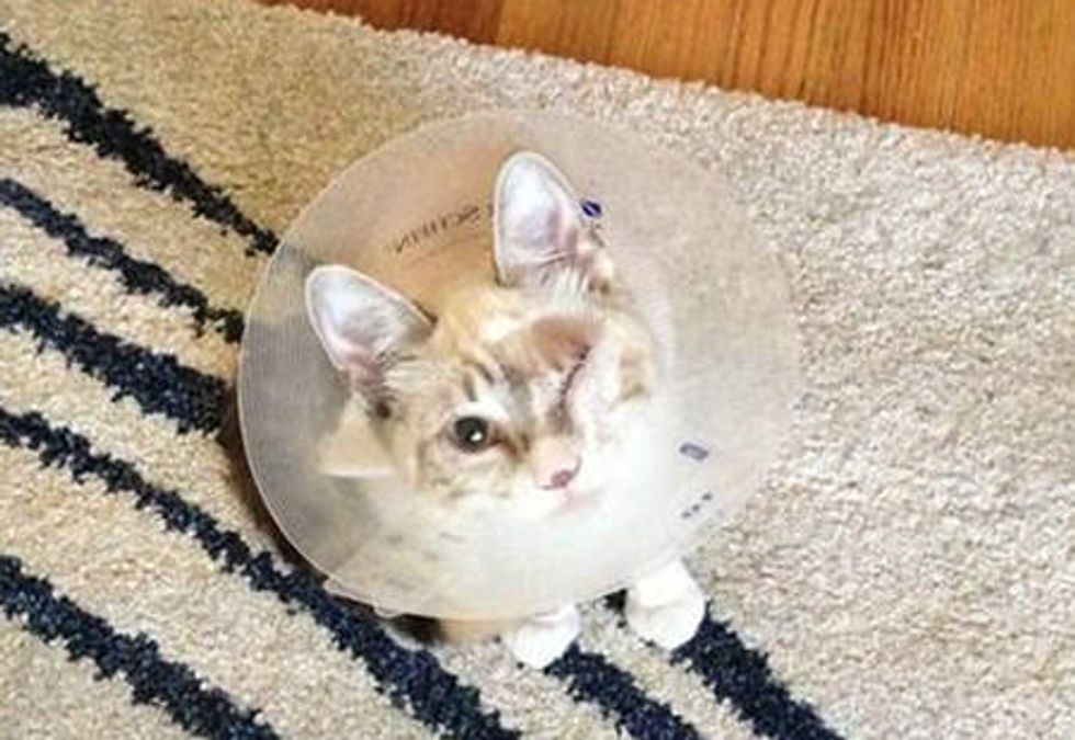 A Second Chance Changes The Life Of An One Eyed Cat