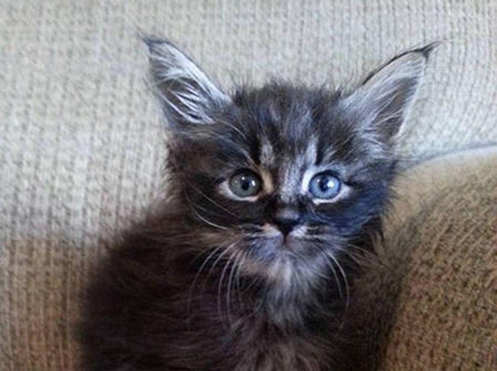 Foster Kitten Looks Like An Elf