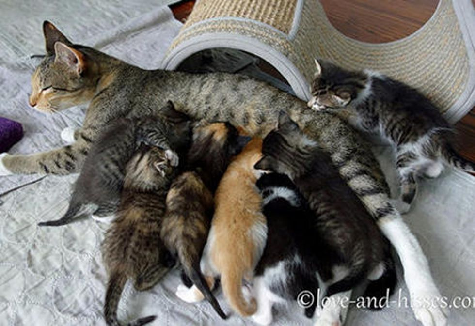 Cat Mother And Her Seven Kittens
