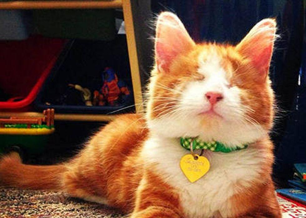 Murdock The Blind Cat
