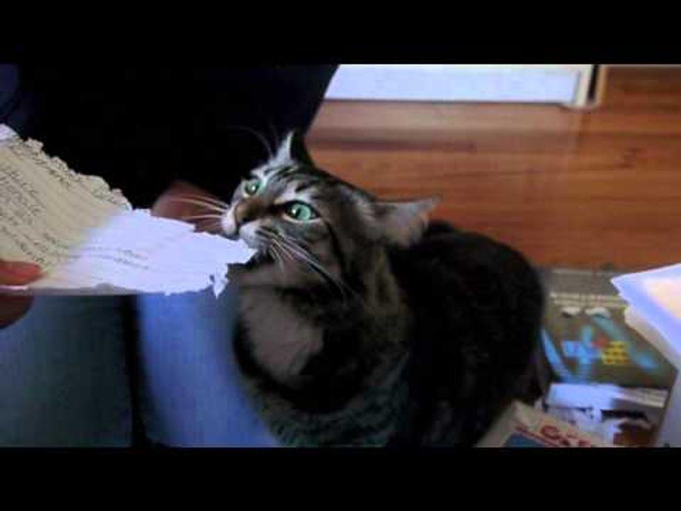 Pepper The Cat Shredding Notes
