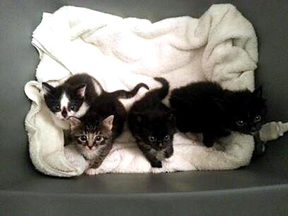 Kittens Saved With Help From Cell Phones