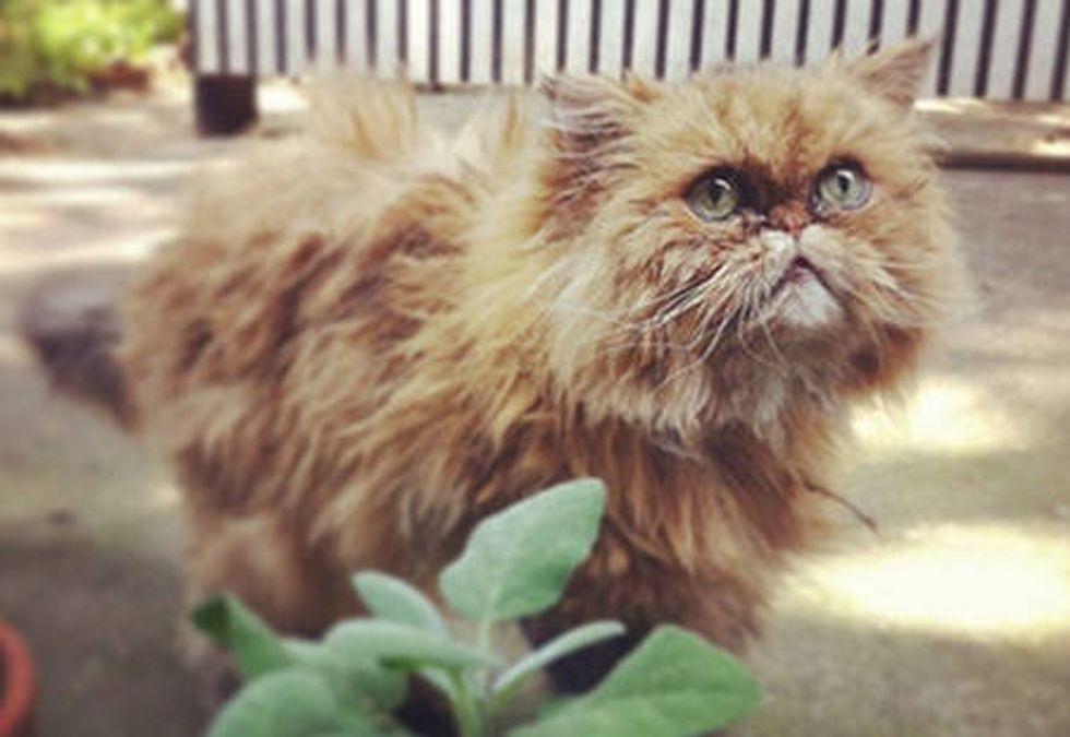 Muppet The Cat: Story Of A Hurricane Sandy Survivor