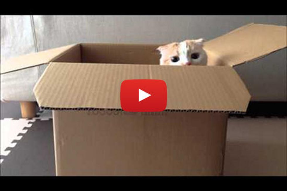 Peekaboo Kitty In A Box