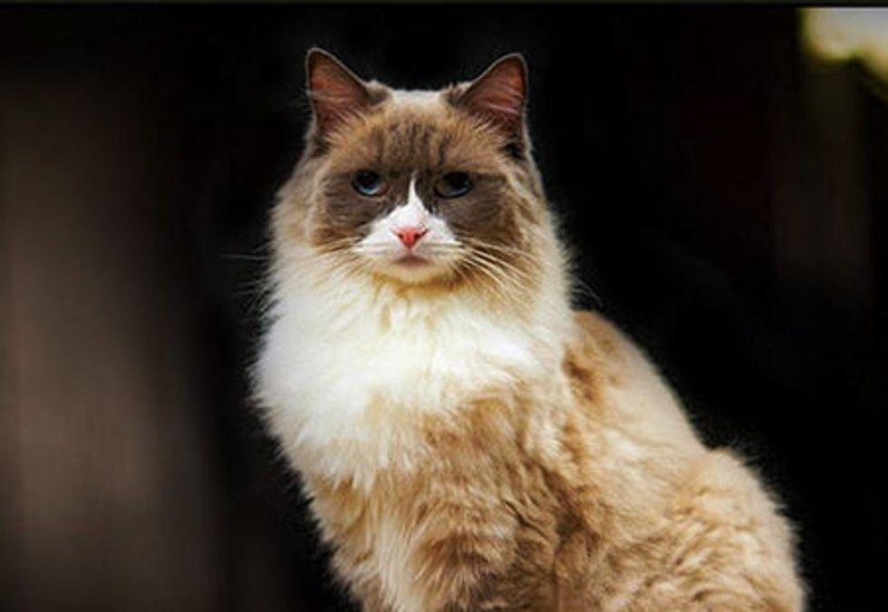 The Algonquin Cat