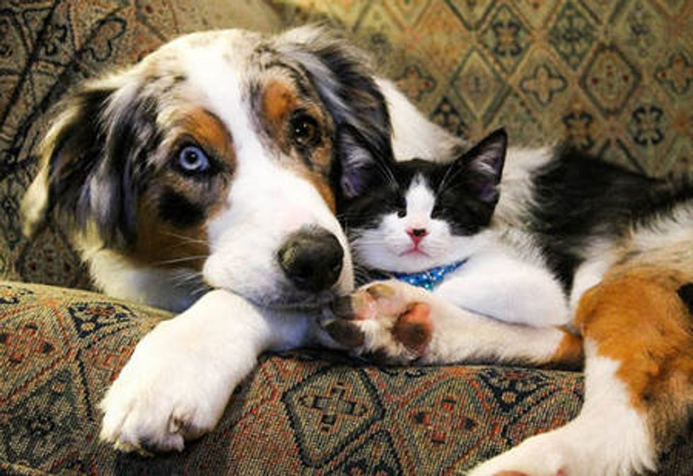 Unlikely Friendship: Stray Cat and Dog