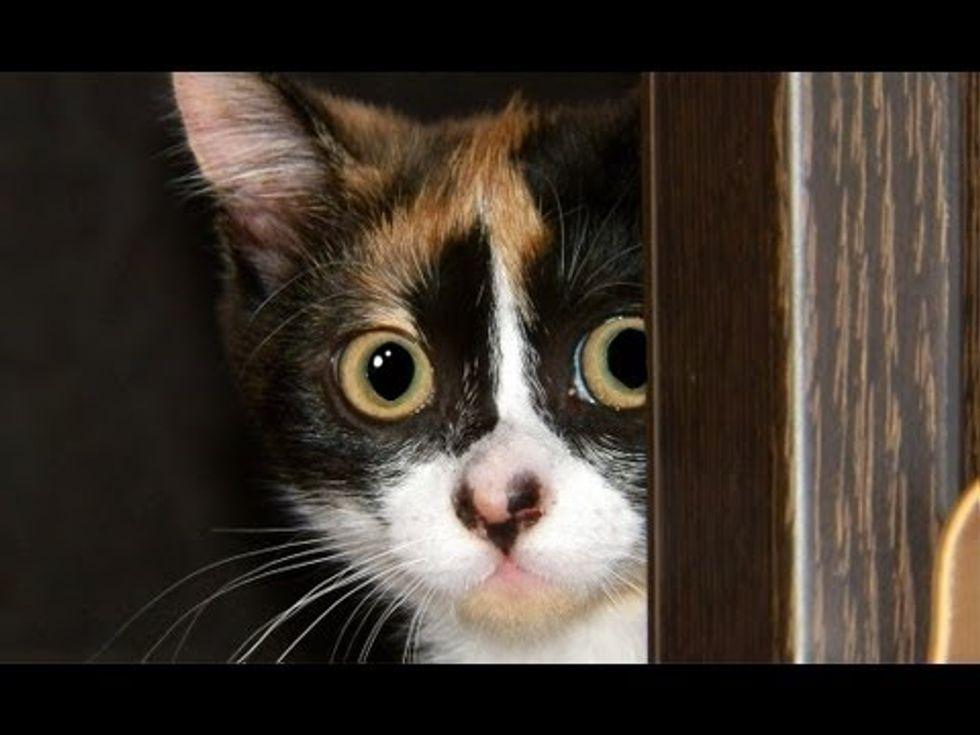 Kitten Stalking