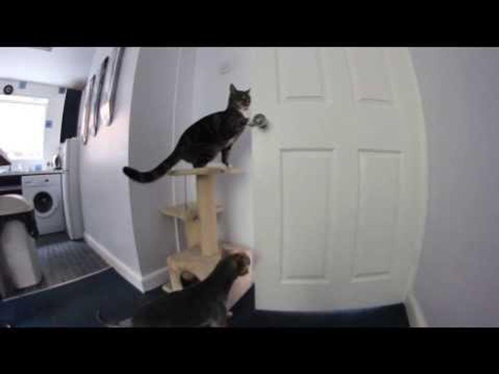 Cat Helps Dog Escape Kitchen