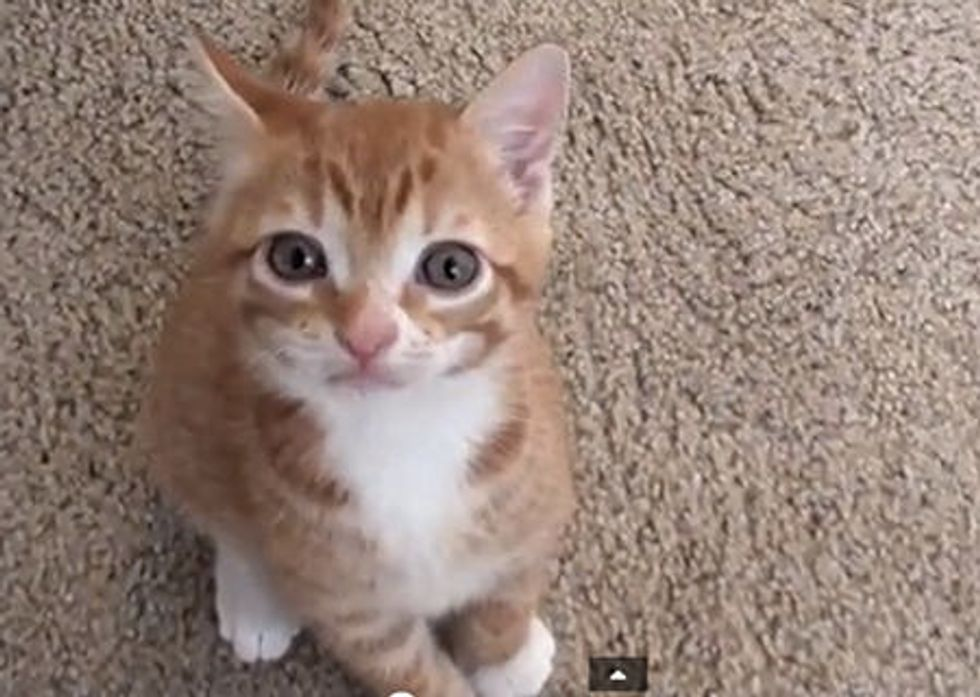 Cute Kitten Talks to Owner!