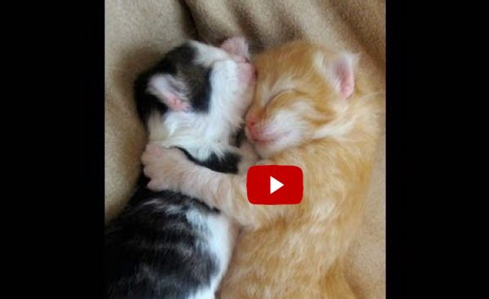 Kittens Wake Up Cuddled in Each Other's Arms. This is Unbearably Cute!