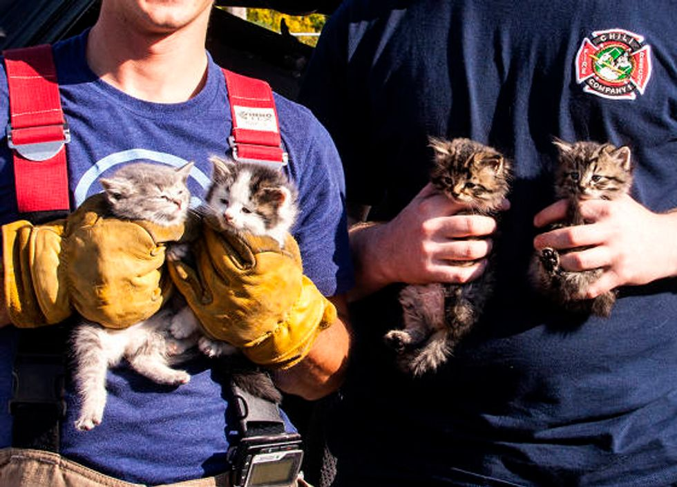 Kittens Saved And Adopted By Firefighters