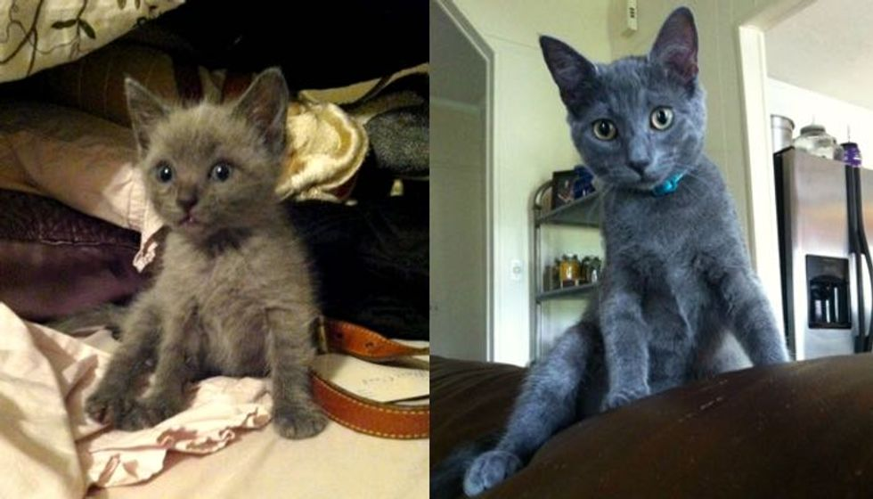 Blue Kitten Found at Abandoned House is Given a Real Home