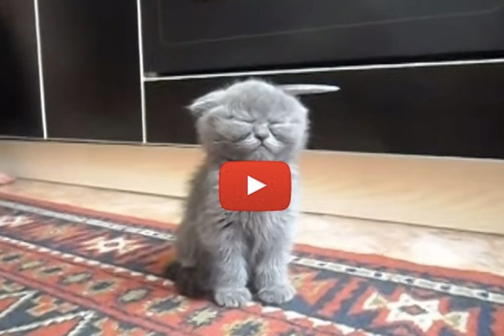 Cute Sleepy Kitten Refuses To Sleep