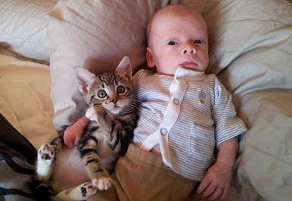 Foster Kitten And Her Little Human