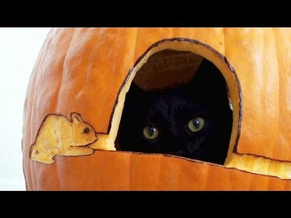 Rescue Black Cat And His First Pumpkin