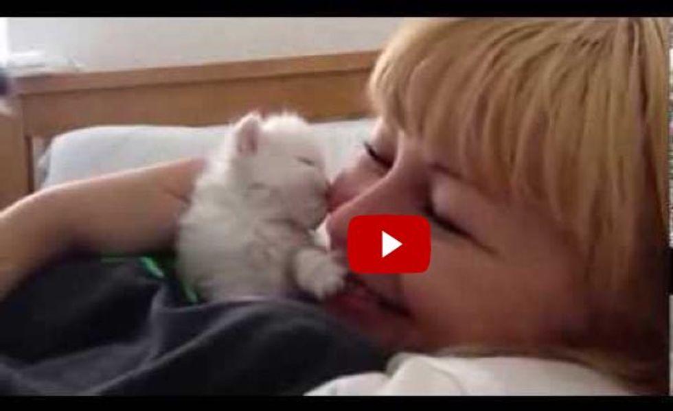 Cute Kitten Gives Kisses