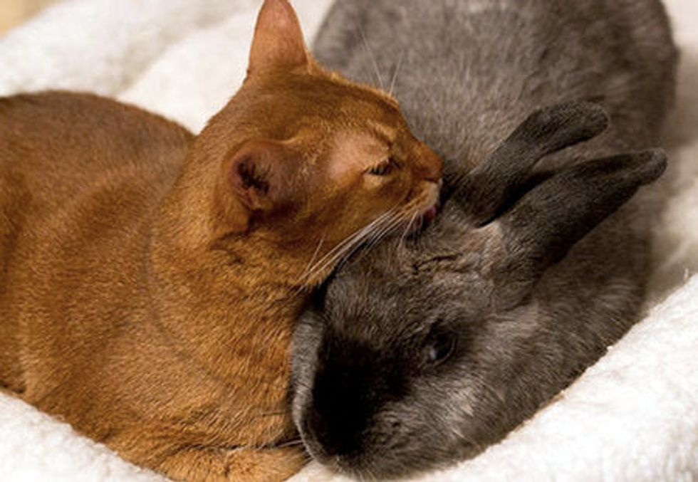Rescue Cat Finds Friendship With Rescue Rabbit