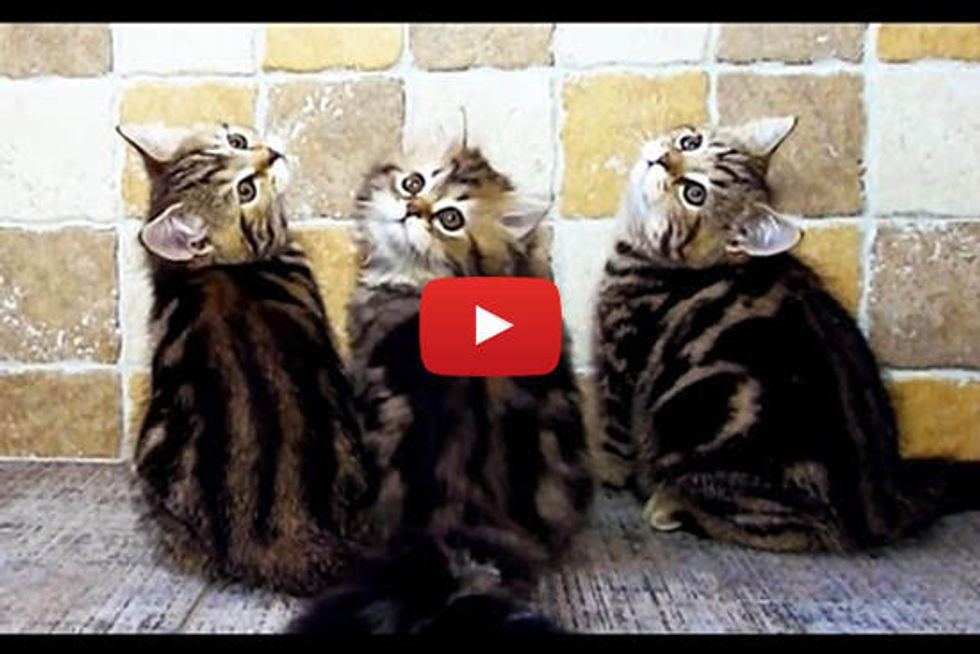 Kittens Doing Exercise