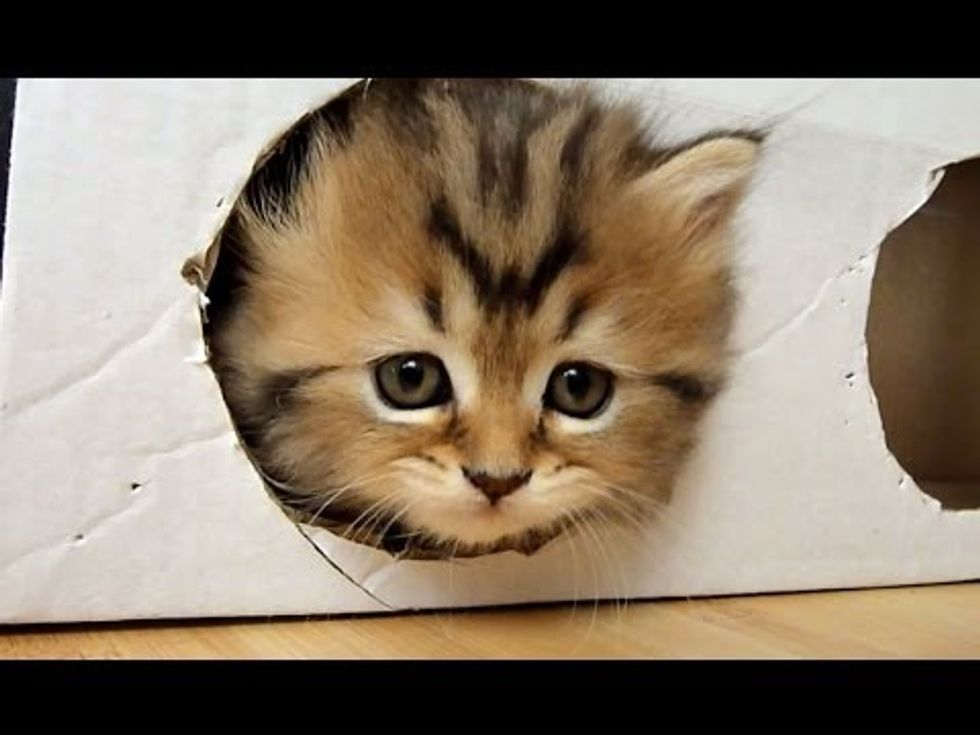 Kittens And a Box