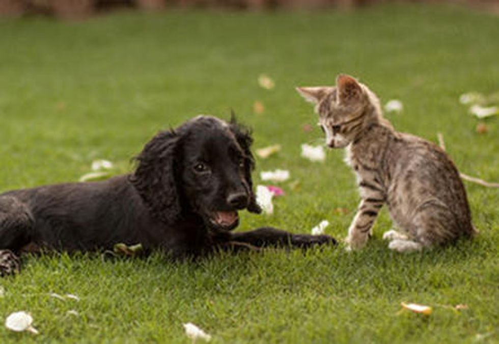 Stray Cat And His Spaniel Grow Up Together