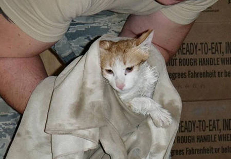 Rescue Kitten Touches The Hearts Of Soldiers