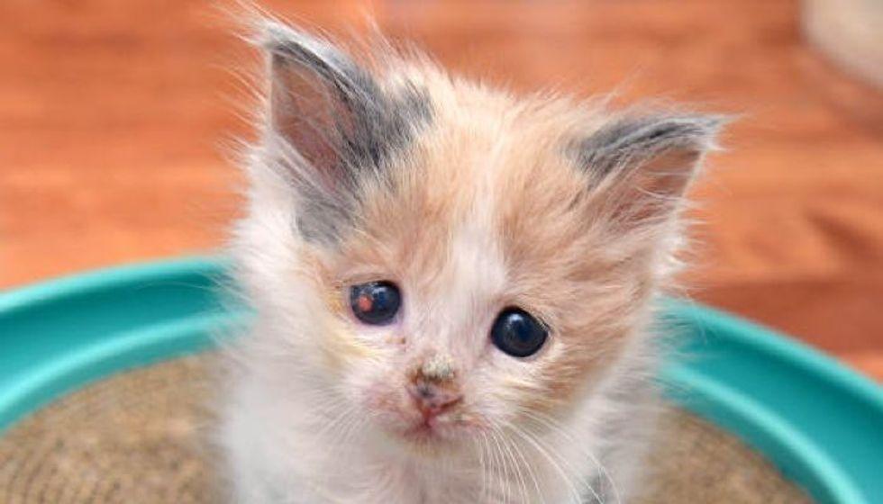 Blind Kitten Healing Thanks To Saving Grace