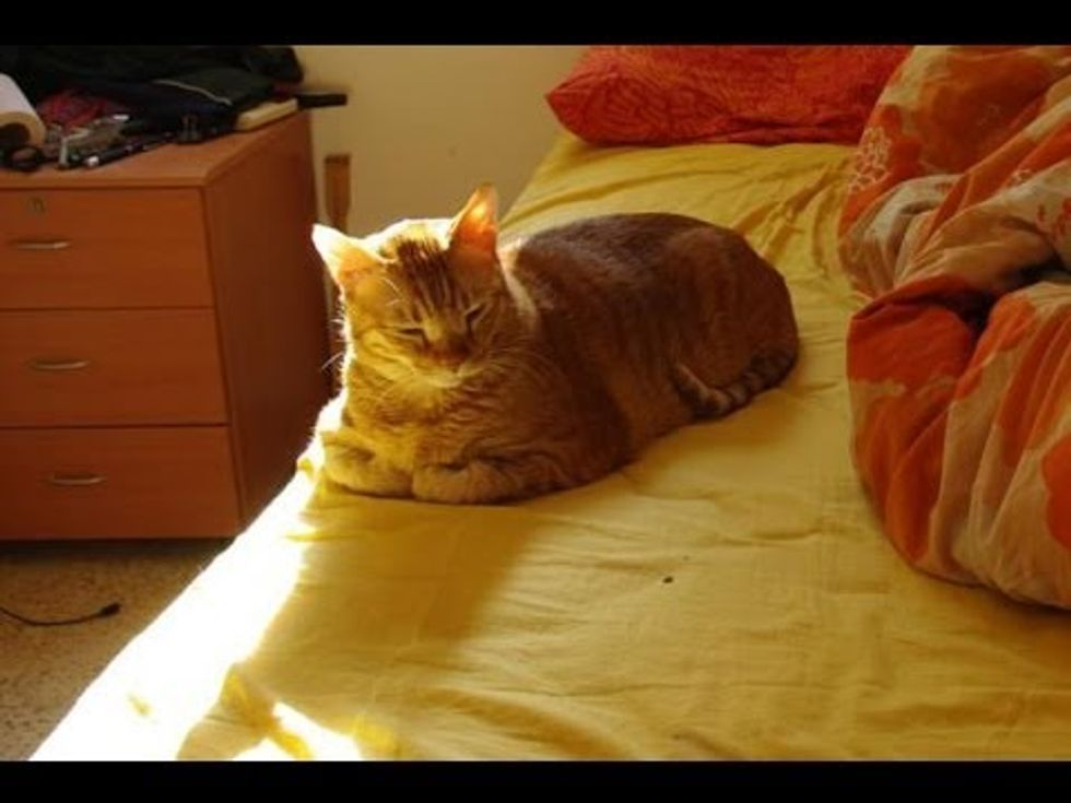 Sunbathing Kitty Timelapse