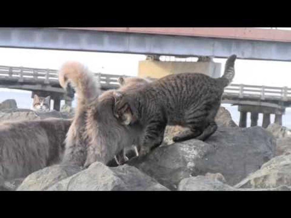 Bay Cat Buddies