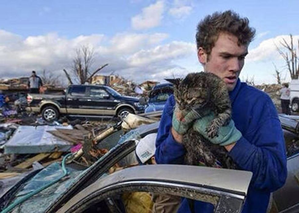 Cat Rescued From Rubble After Midwest Tornados