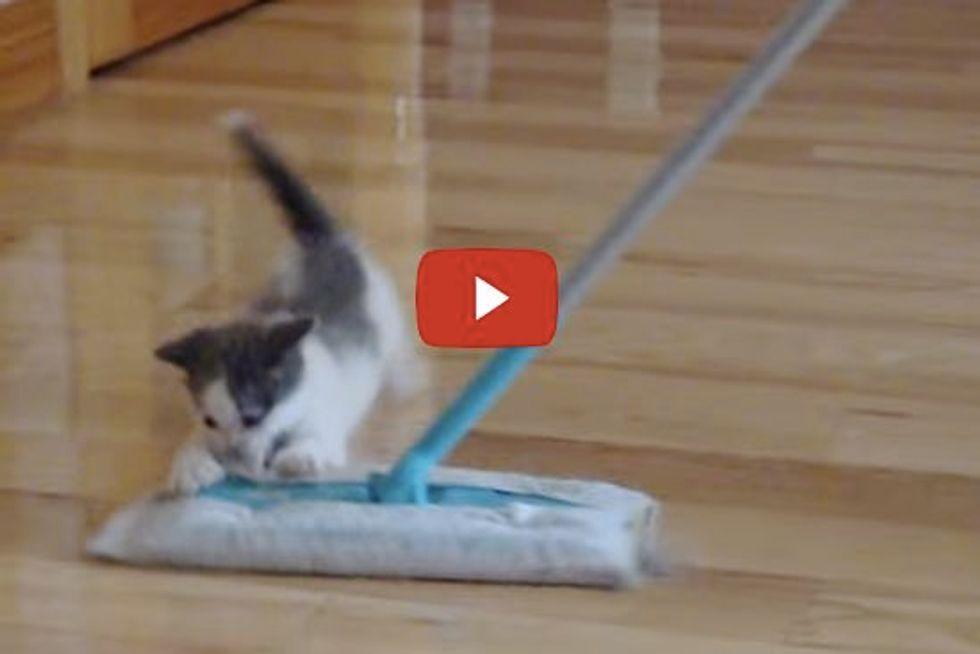Little Kitten Tries to Hunt a Swiffer