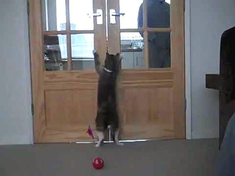 Cat Stands To Open Kitchen Doors