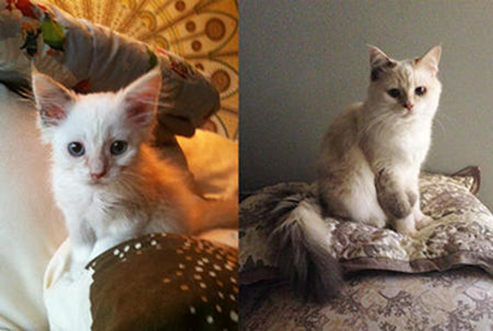 Pippa The Kitten Grown Up To Be Beautiful Cat