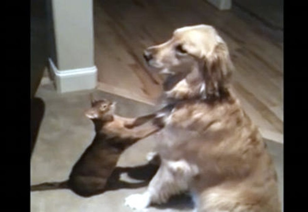 Adorable Cat And Dog Friends