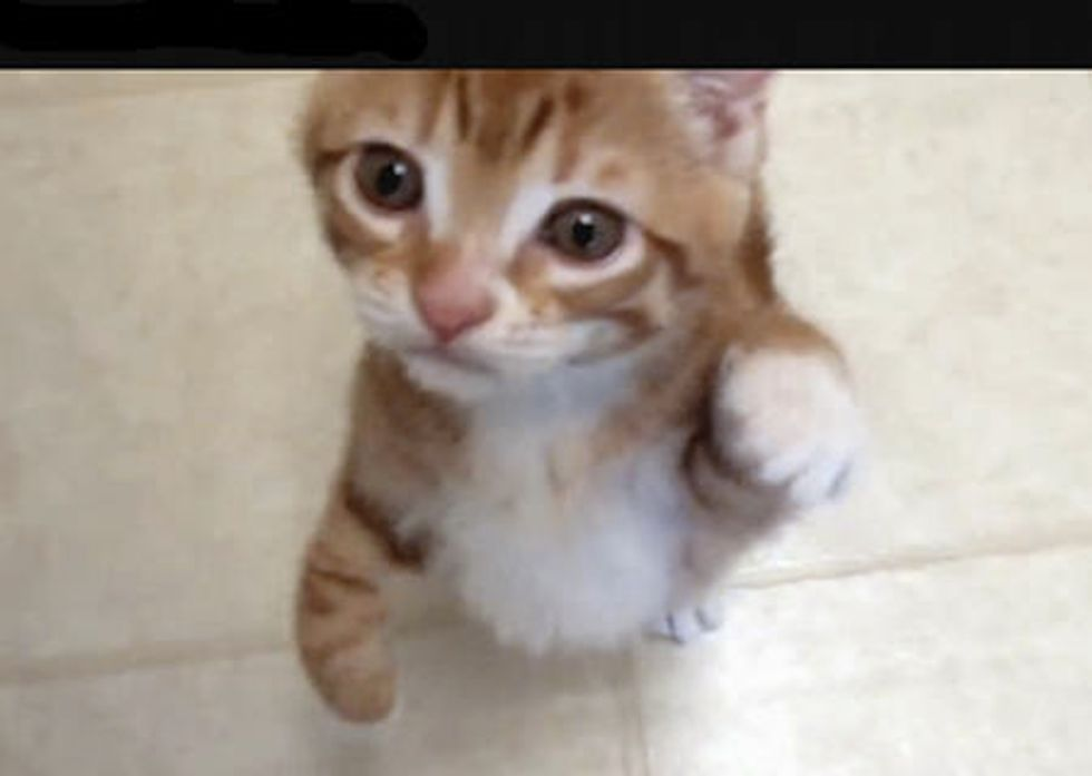 What Does the Kitten Say?