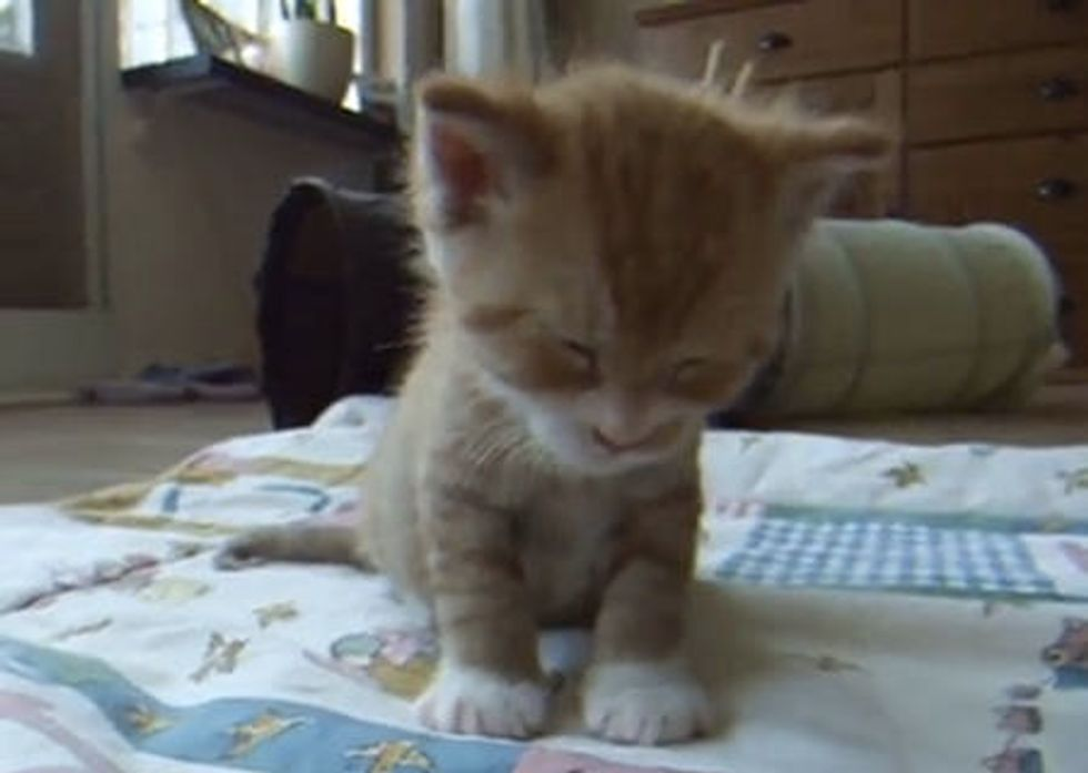 Tiny Kitty Falling Asleep