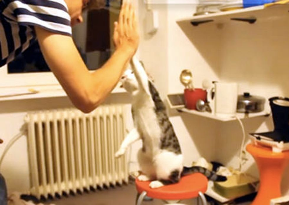 Cats Giving High Fives
