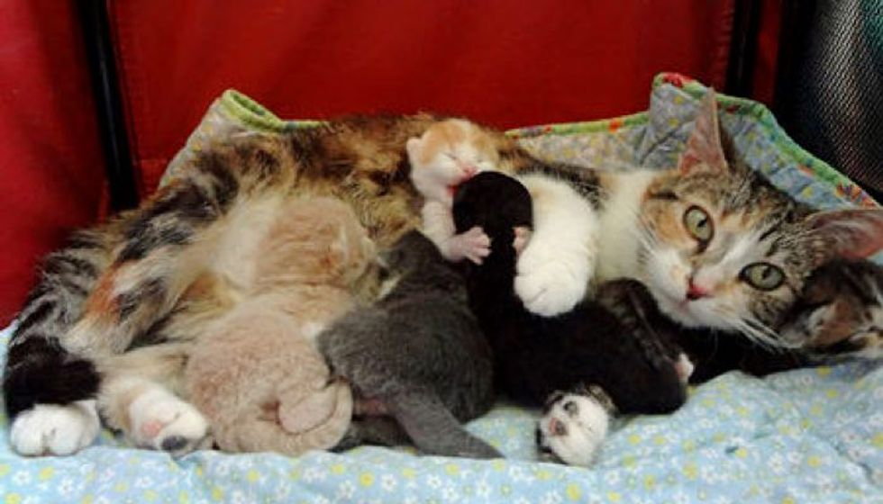 Love And Dedication Of A Stray Cat Mama